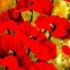 Grande Poppies